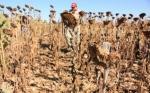 Productores bolivianos piden biotecnología y libre exportación para competir