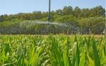 Riego: según un ensayo, puede duplicar el rendimiento del trigo y aumentarlo más de 50 % en maíz