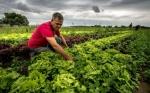 Al agro europeo, muy dependiente de los subsidios, el tiempo se le agota