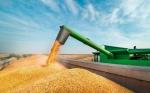 Investigación, esencial en soberanía alimentaria: CIMMYT