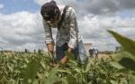 Pequeños productores del Oriente en Bolivia hablarán de transgénicos en septiembre 2018