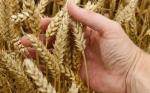 El cambio climático revela un nuevo problema oculto hasta ahora: los cultivos serán menos nutritivos con el tiempo