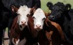 Argentina exportaría carne vacuna por US$1.800 millones gracias a demanda china y devaluación