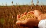 Argentina: El Gobierno dispuso la suspensión transitoria de las exportaciones de soya y derivados