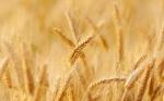 El secuestro del término «sostenible» por parte de grupos anti-OGM es engañoso - Científicos de la UCC