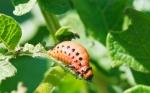 Cómo el cambio climático multiplicará las plagas de insectos