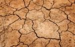 Europa presenta medidas adicionales para apoyar a los agricultores frente a la sequía