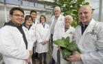 Las algas verde-azules prometen ayudar a aumentar los rendimientos de los cultivos alimentarios