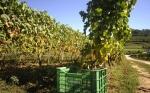 El cambio climático obligará a variar hábitos y cultivos a los productores