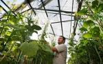 Punto de vista: Los híbridos de Beck y Benson Hill Biosystems se han asociado para desarrollar conjuntamente y comercializar un rasgo que mejora la eficiencia de la fotosíntesis