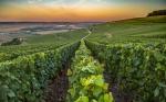 Cómo el cambio climático podría afectar al champán