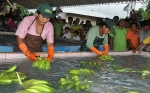 Comunidad Andina une esfuerzos para prevenir ingreso de plaga que afecta cultivos de banano
