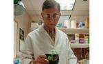 ¿Pueden las semillas de algodón tóxicas en su momento ayudar a alimentar al mundo?