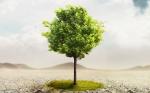 Energía, cambio climático y reforestación