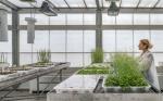 España: El Centro de Investigación en Agrigenómica crea plantas resistentes a la sequía más extrema