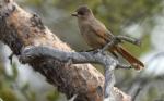 Las áreas de conservación ayudan a las aves a adaptarse al cambio climático