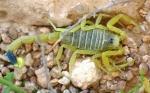 Veneno de escorpión para hacer llegar fármacos al cerebro
