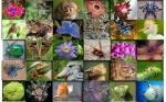 Según los expertos, la biotecnología impulsa la conservación de la biodiversidad