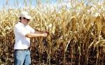 Paraguay: Con biotecnología lograron duplicar producción del maíz