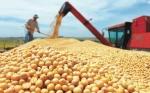 ANAPO: Valor de exportación de soya llega a $us 480 millones hasta octubre