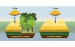 La verdad incómoda sobre el impacto ambiental y climático de la agricultura ecológica