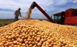 Bolivia: Productores de soya piden aprobación de semilla HB4