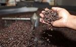 Bolivia generó más de $us 7,5 millones por la exportación de café el 2018
