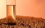 Paraguay resigna 176 millones de dólares por no industrializar la soja