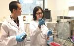Nuevos avances en la regulación por microARNs en plantas