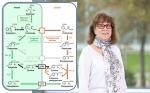 Los científicos de Purdue encuentran una importante vía compuesta de las plantas