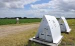 Abejas que esparcen fungicidas: pulverizadores de la naturaleza