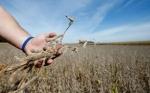 El mercado de granos se muestra expectante a las negociaciones entre China y Estados Unidos