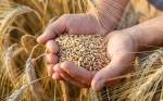 Informe afirma que la prohibición genética está costando a los agricultores de Australia del Sur
