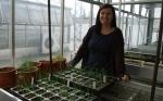 En busca de plantas de tomate más resistentes a plagas con la ayuda de microorganismos