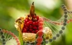 Lo que debes saber sobre la equivalencia sustancial de cultivos transgénicos y convencionales