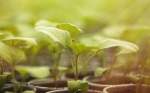 Fotosíntesis mejorada para luchar contra el cambio climático