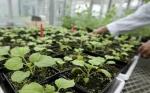 Las plantas podrían darnos nuevos tratamientos para el cáncer, el VIH y otras enfermedades si tuviéramos mejores regulaciones en agricultura molecular