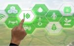 Bioeconomía: de la cría de insectos al control de malezas