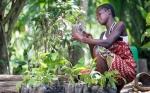 ¿Puede una aplicación móvil ayudar a Barry Callebaut a erradicar la pobreza en la cadena de suministro de cacao?