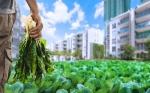 Cinco visiones para el futuro de la alimentación y la agricultura