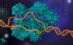 Olvídese de genes individuales: CRISPR ahora corta y empalma cromosomas completos