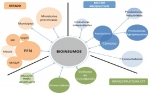 Argentina: El Ministerio de Agricultura, Ganadería y Pesca lanza un Plan de acción para promover los Bioinsumos de uso agropecuario