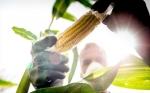 Cuba abre la puerta a cultivos transgénicos en medio de la crisis alimentaria
