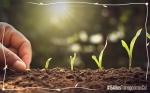 Estudio analiza los beneficios de 15 años de cultivos transgénicos en Colombia