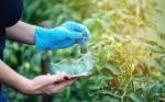 Se retiró la enmienda de edición genética al proyecto de ley de agricultura del Reino Unido, lo que retrasó el acceso de los agricultores a los cultivos CRISPR