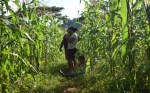 Las mujeres rurales en Honduras toman la delantera en el uso de la información agroclimática