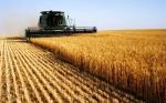 Australia da la bienvenida a los cultivos modificados genéticamente para el sur del continente