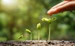 Sembrar soya sustentable también tiene beneficios económicos