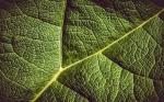 Estudio revela que las plantas recuerdan la sequía