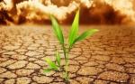 América Central enfrentará problemas de disponibilidad de agua debido al cambio climático